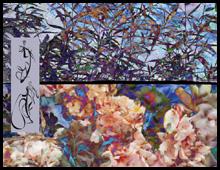 <b>Compositions chromatiques de l'instant…</b> Assemblage calligraphies&peintures numériques